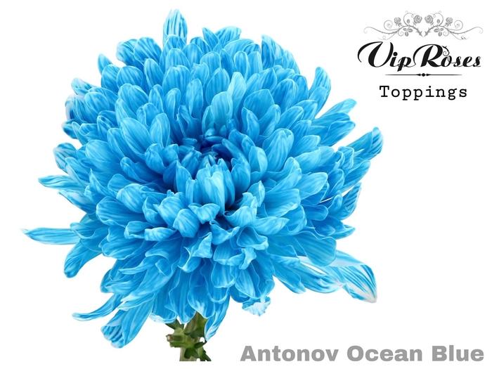 <h4>CHR G ANTONOV OCEAN BLUE</h4>