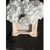 Hortensia Hyd. White 10