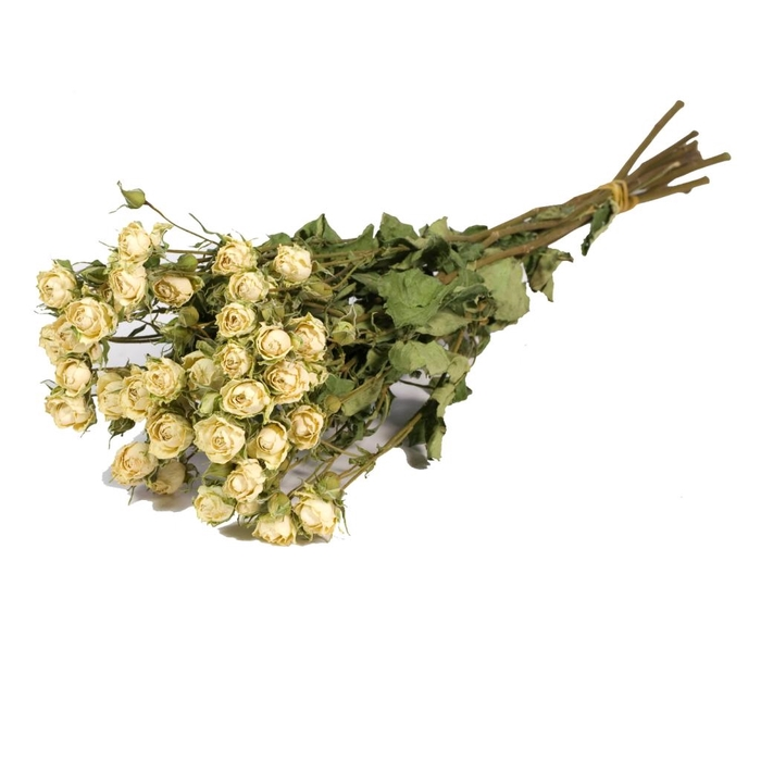 <h4>DRIED FLOWERS - ROSES SPRAY NATURAL WHITE</h4>