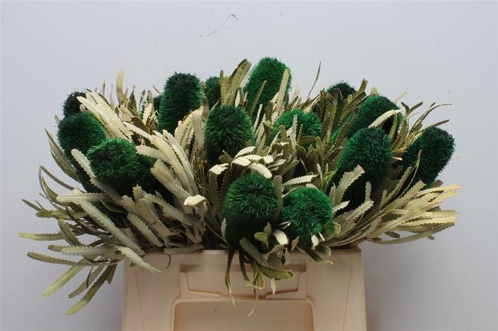 <h4>Banksia Attenuata Green</h4>