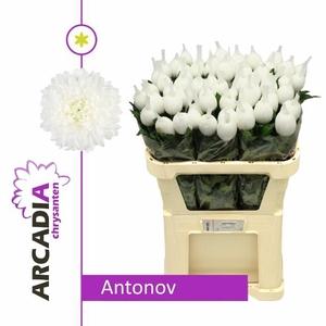 CHR G ANTONOV
