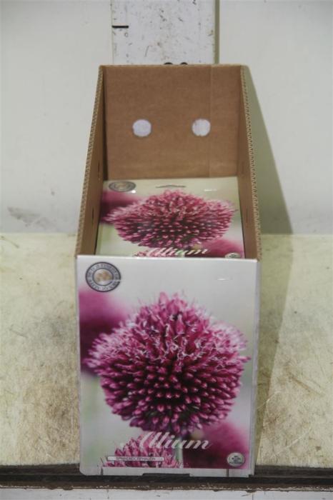 <h4>Bol Allium Sphaerocephalon 10 Zakjes X20</h4>