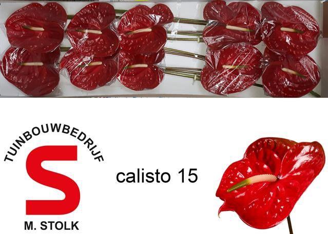 <h4>Anth Calisto</h4>