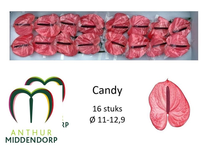 <h4>ANTH A CANDY</h4>