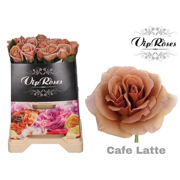 <h4>R GR CAFE LATTE</h4>
