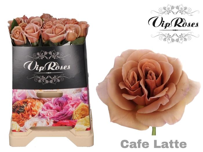 R GR CAFE LATTE