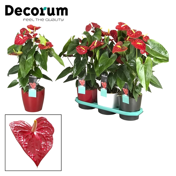 <h4>Anthurium Dakota pot 17 keramiek rood/wit/antraciet</h4>