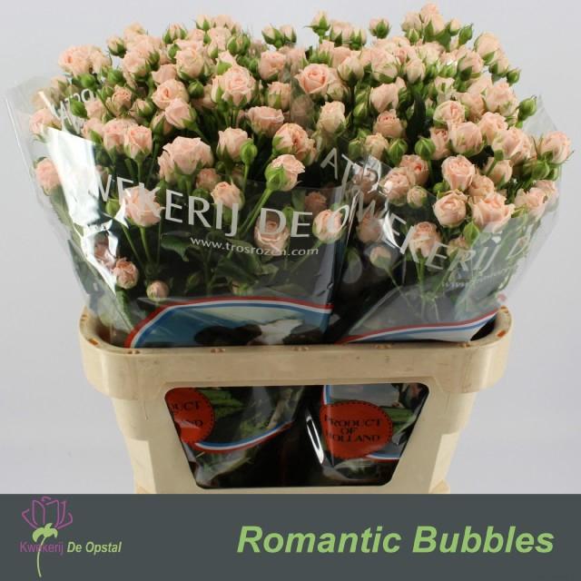 <h4>R TR ROMANTI BUBBLES</h4>