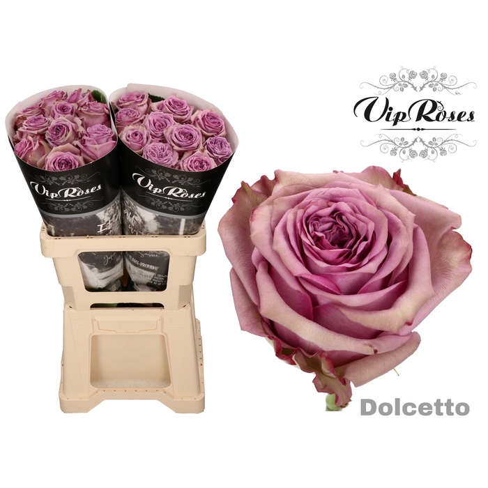 <h4>R GR DOLCETTO!</h4>
