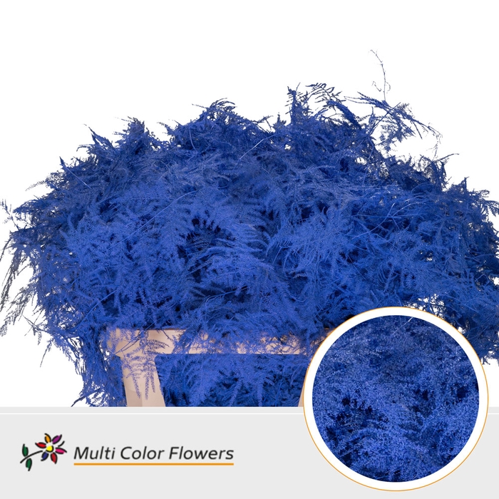 <h4>Asparagus getopt lang gekleurd Blauw donker</h4>