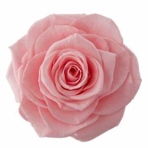 Rose Ines Baby Pink