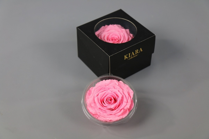 <h4>Rosa Preserved Baby Pink Solitarie</h4>