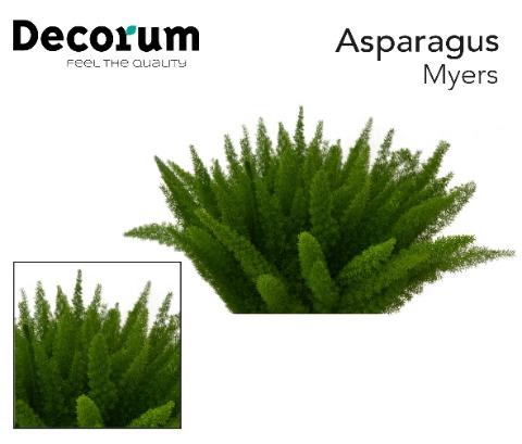 <h4>ASP DENS MYERS 50cm x50</h4>