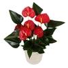 ANTHURIUM RED SUCCESS P09