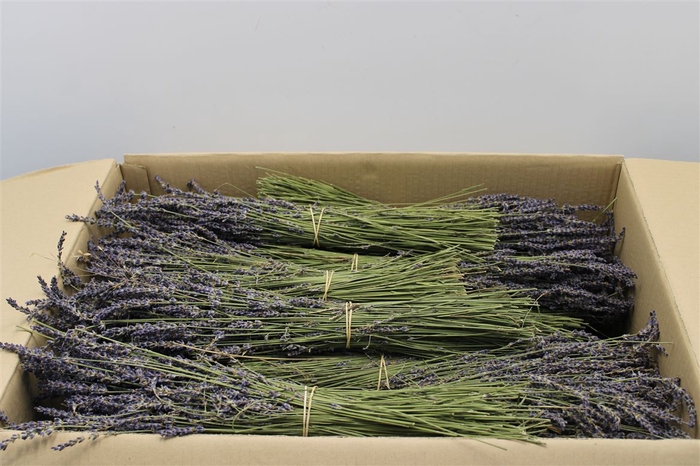 <h4>Lavandula Dried 100gr</h4>