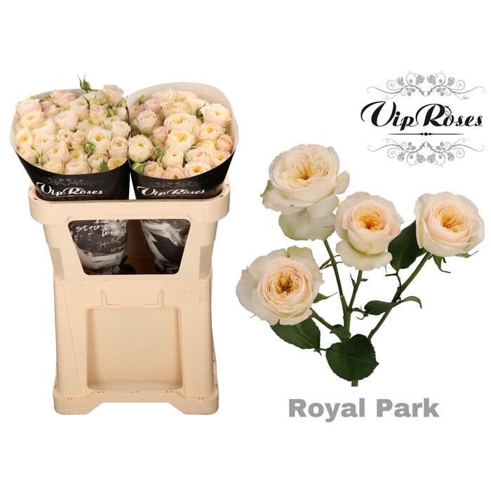 <h4>R TR ROYAL PARK</h4>