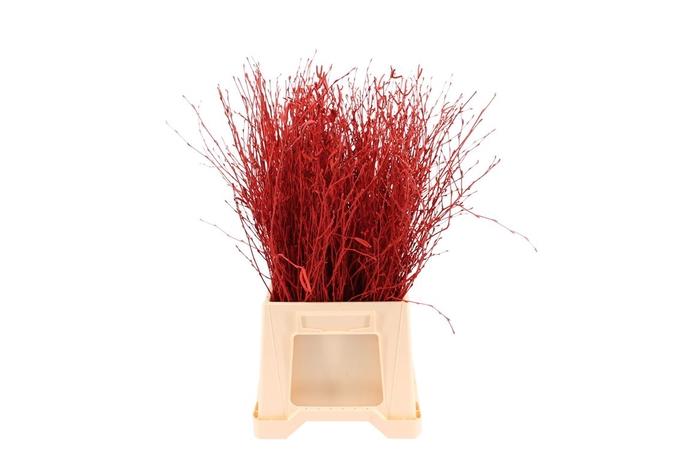 Berk ( Birch ) Red