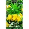 Z Fritillaria Lutea