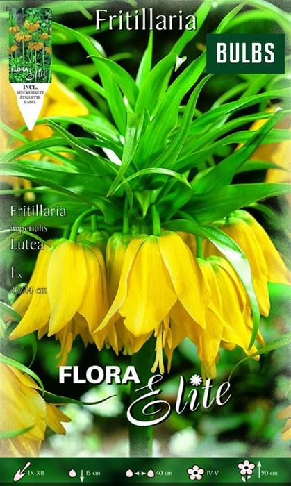 <h4>Z Fritillaria Lutea</h4>