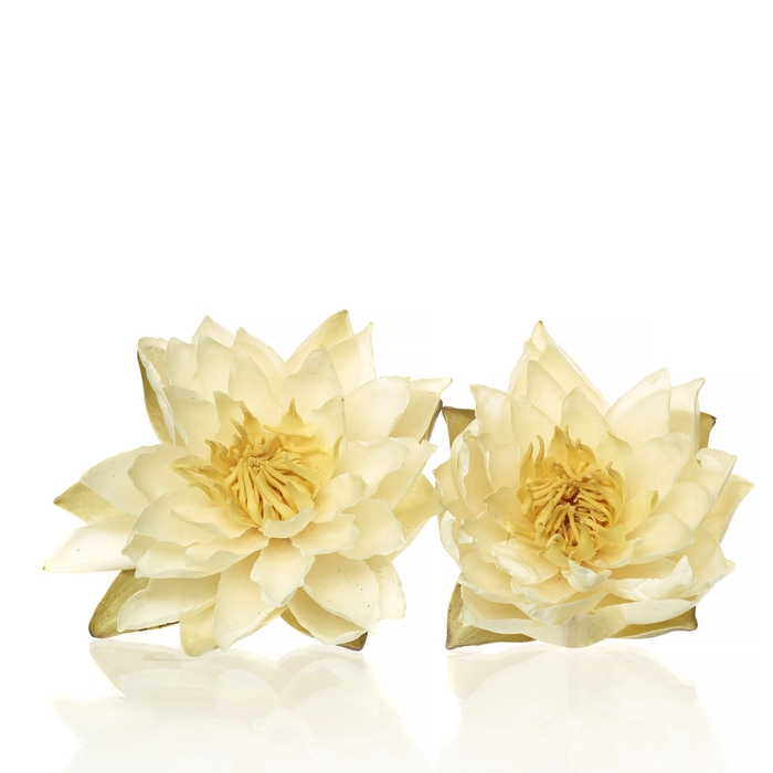 <h4>Water Lily white large</h4>