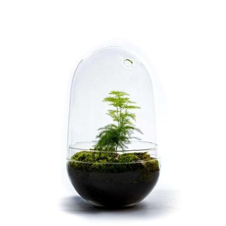 <h4>Gccr-2104 Growing Concepts Egg L-asparagus</h4>