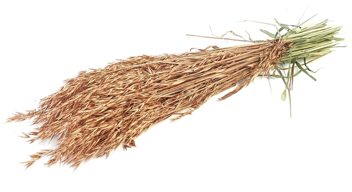 <h4>Avena per bunch Copper</h4>
