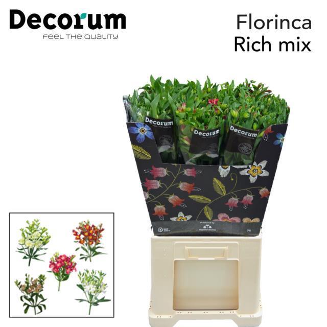 <h4>Flor Rich Mix</h4>