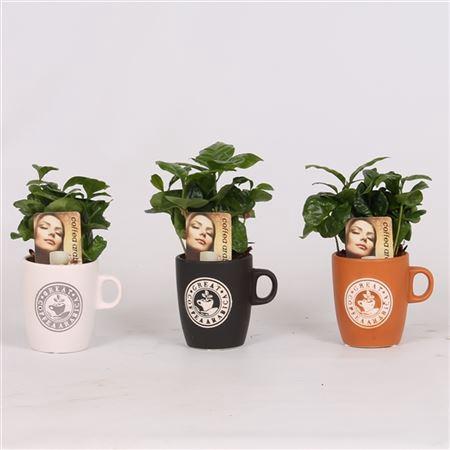 <h4>Coffea Arabica Keramiek Koffiemok</h4>