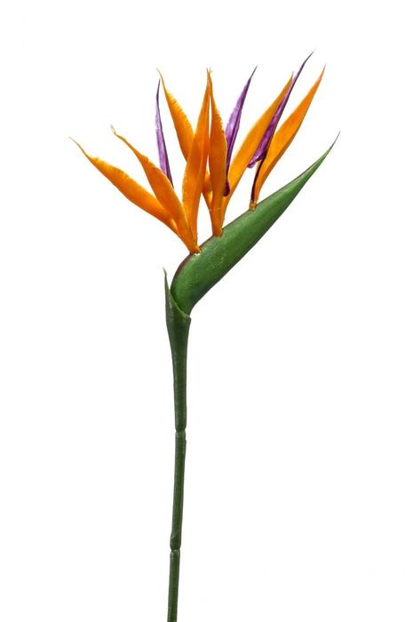 <h4>Silk Strelitzia mini 65cm</h4>