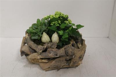 <h4>2215 Driftwood Krans plants</h4>