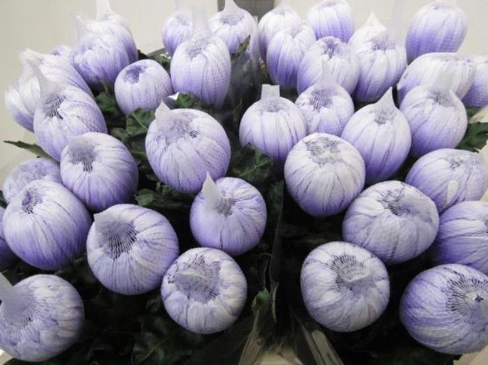 <h4>Chr G Antonov Pastel Lilac</h4>