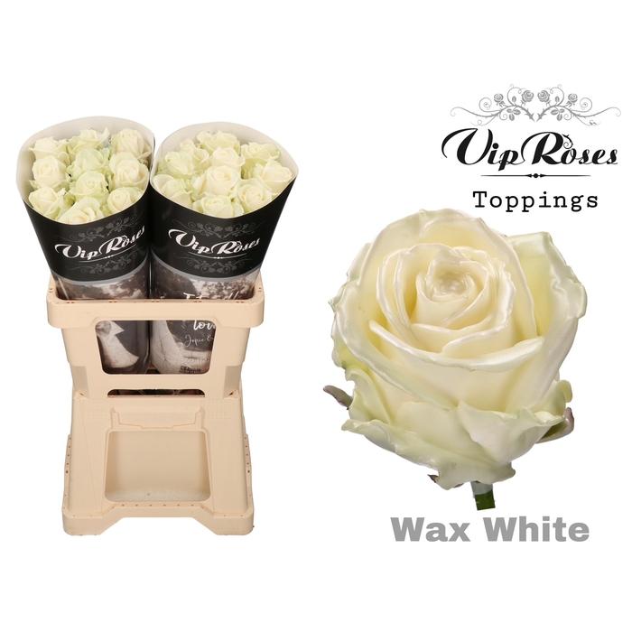 <h4>R GR WAX WHITE (60cm)</h4>
