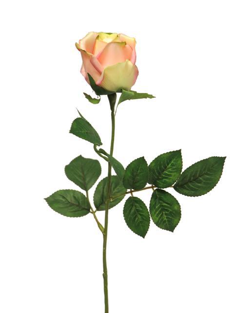 <h4>DF885057000 - Rosa susan bud salmon 65cm</h4>