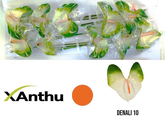 <h4>ANTH A DENALI</h4>