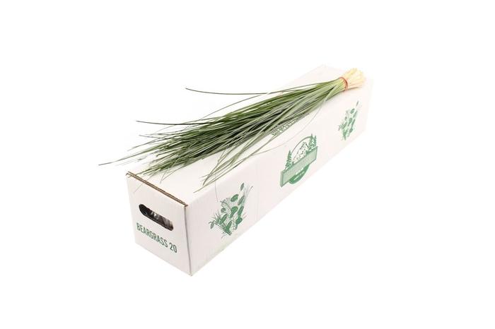 <h4>Beargrass X 20</h4>