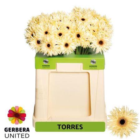 <h4>GE GS TORRES</h4>