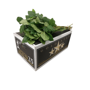 SALAL TIPS GOLD STAR POUNDERS