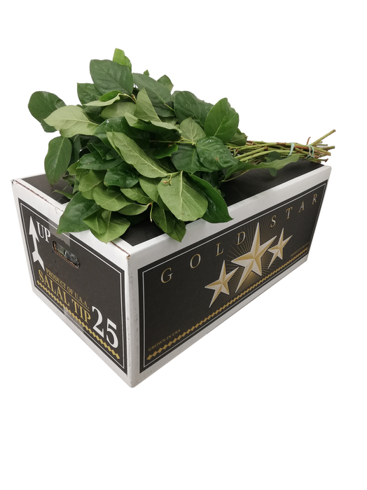 <h4>SALAL TIPS GOLD STAR POUNDERS</h4>