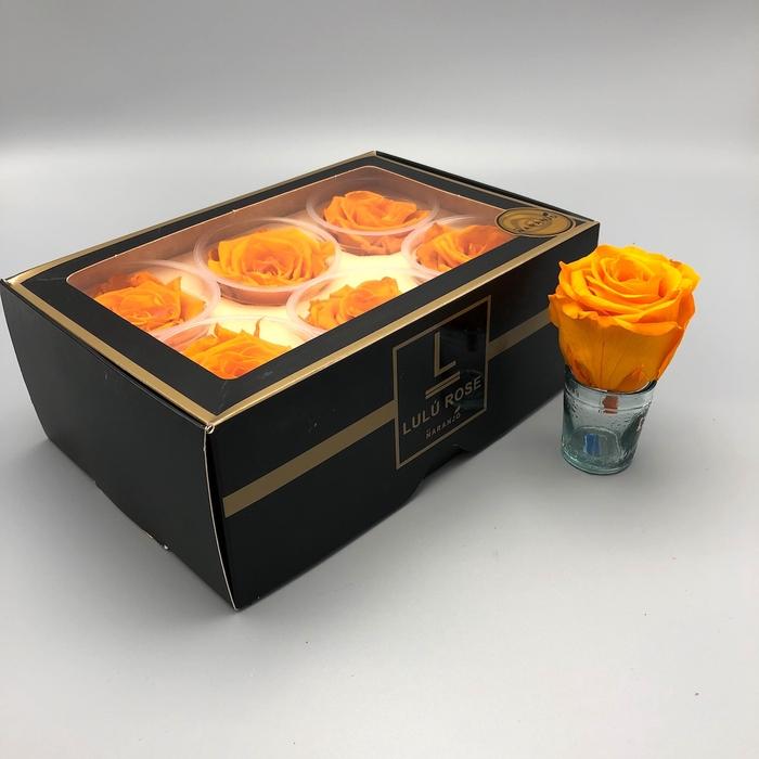 <h4>R PR Lulu (Large) Orange</h4>