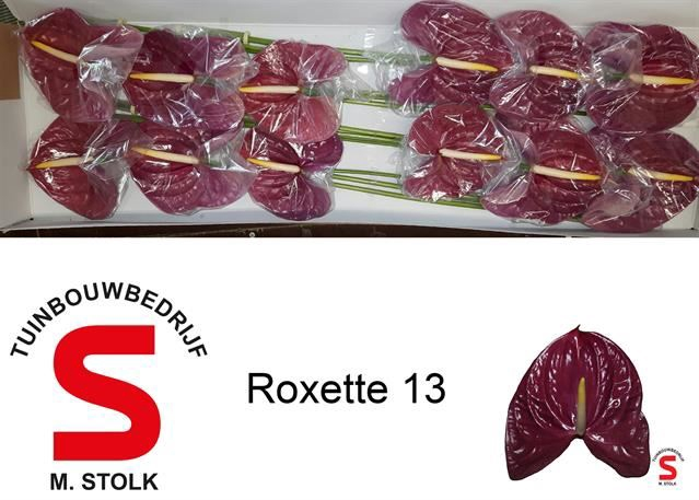 <h4>Anth Roxette</h4>