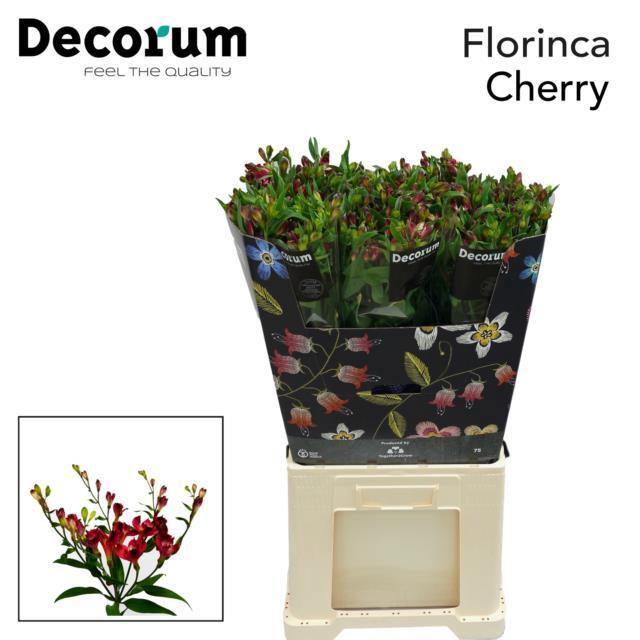 <h4>Flor Cherry</h4>