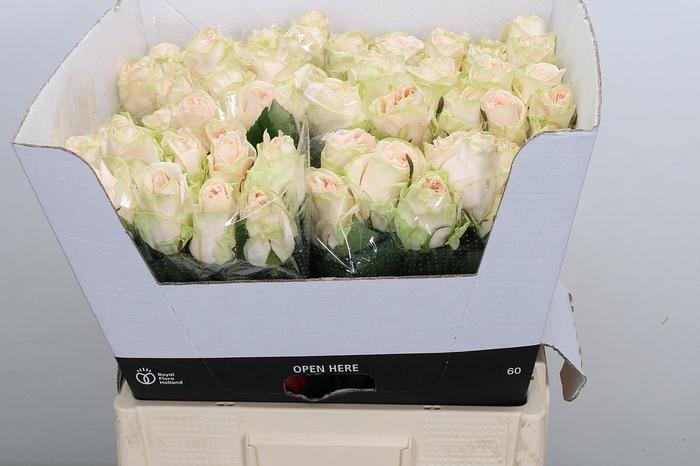 <h4>R GR WEDDING ROSE</h4>