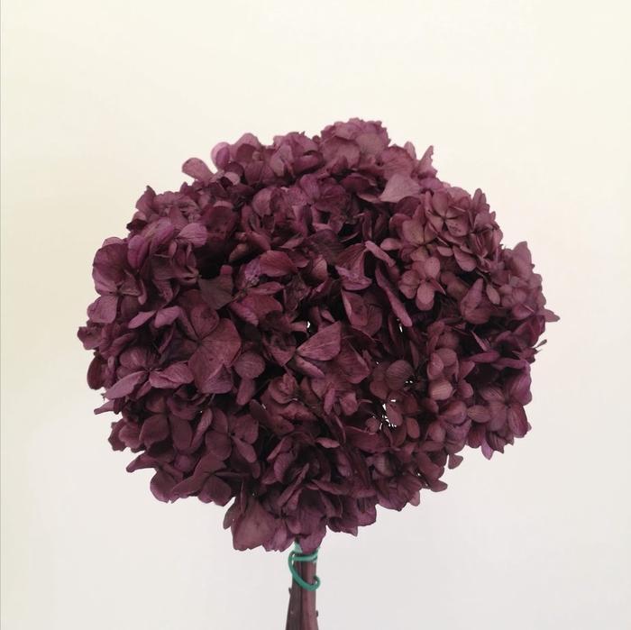 <h4>Hortensia morada preservada</h4>