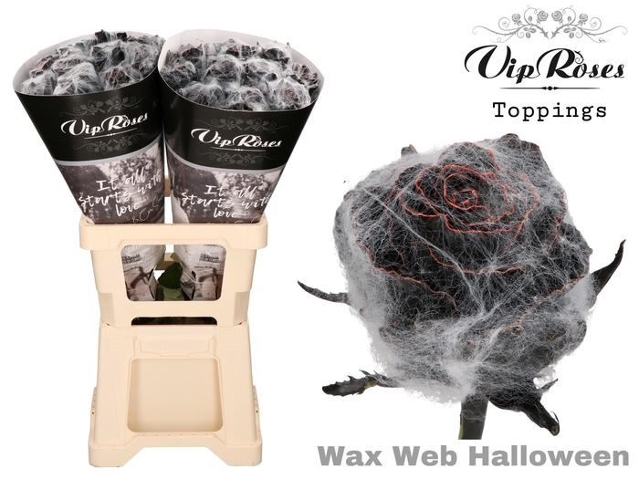 <h4>R GR WAX WEB HALLOWEEN</h4>