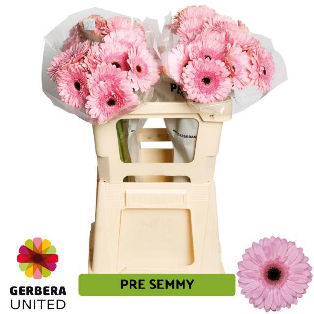 <h4>GE GR PRE-SEMMY</h4>