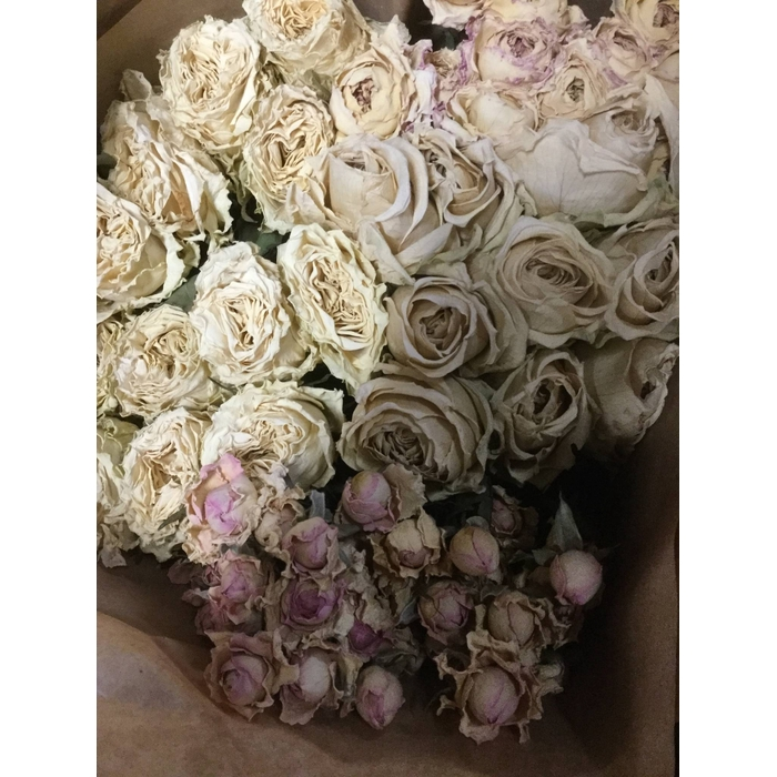 <h4>DRIED FLOWERS - ROSES LIGHT VINTAGE MIX</h4>