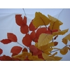 STABILISED BEECH AUTUMN UNICOLOR 150 GR