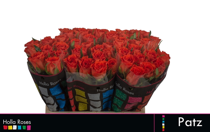 <h4>Rosa grootbloemig Patz</h4>