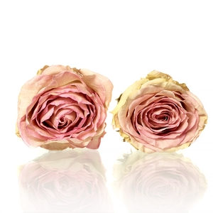 Rose Esperance bright pink 5-5,5cm