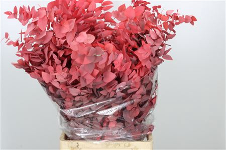 <h4>Dried Cynerea Red Wine Preserved</h4>